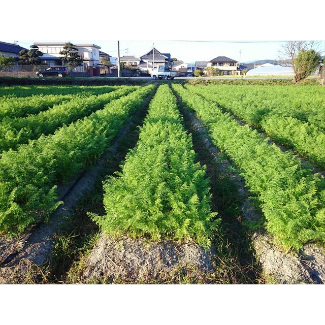 【店舗販売】無農薬 有機にんじんの葉っぱ 100g