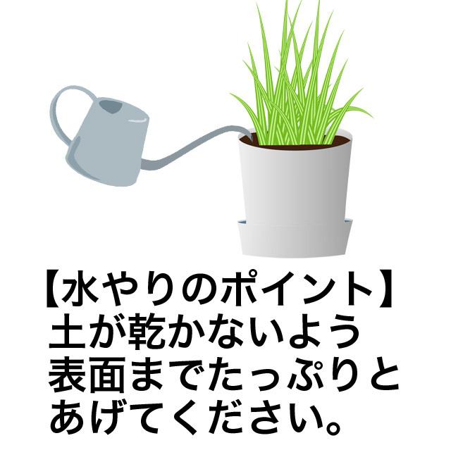 うさぎの根っこ付き生牧草