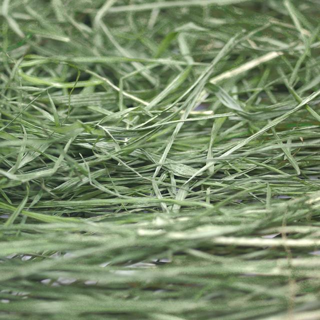 究極の乾燥生牧草 40g