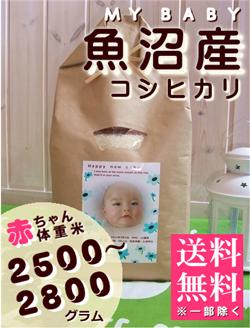出産内祝い体重米 MY BABY魚沼:2500~2800g