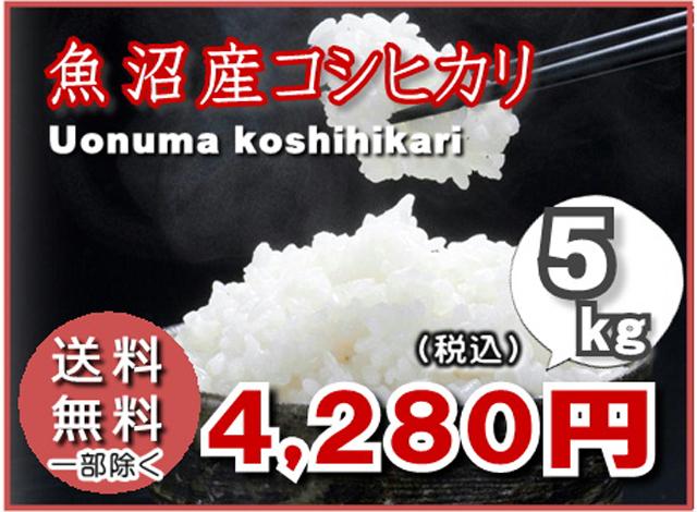 魚沼産コシヒカリ5kg
