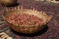 エチオピア イェルガチェフェ ウォテ ナチュラル シティロースト(200g)[eti4] 〔お取り寄せ/コーヒー豆(モカ)/通販〕