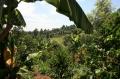 ケニア ガクイニファクトリー シティロースト(200g)[ke-17](コーヒー豆/アフリカ/通販)