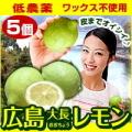 国産レモン(5個セット) 皮まで食べられる農薬をほとんど使用していないれもんです ※クール便出荷※【代引き不可】