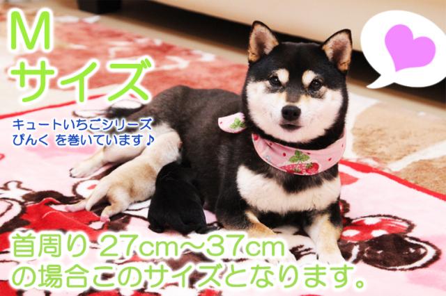 【メール便可】 ダニやノミを防ぐ有機JAS認定天然ハーブ100%配合 ハーブのくびわ『M』サイズ 首周りが27~37cmサイズの愛犬ちゃんにピッタリです。