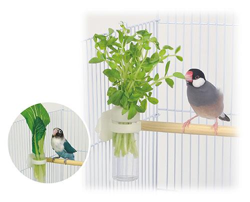 小鳥のベジタブルポッド