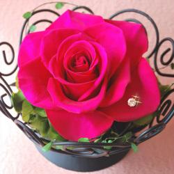 プリザーブドフラワー プレミアムローズ premium rose☆ギフトに最適♪最高級プリザ、アモロッサローズ使用の画像
