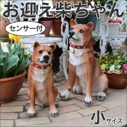 センサー付お迎え柴ちゃん 小サイズ【新聞掲載】の画像