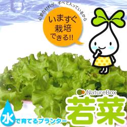 水で育てる プランター NatureBox若菜 FPI2-001の画像