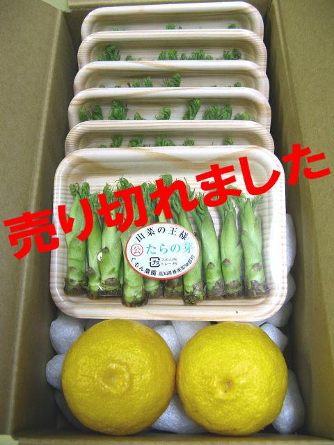 柚子+タラの芽