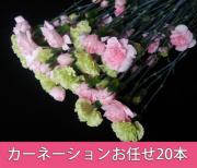 カーネーション,色お任せ,花束,20本