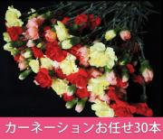 カーネーション,色お任せ,花束,30本