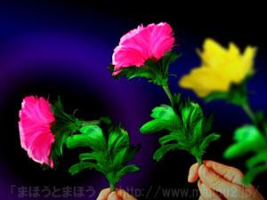 おじぎする色変わりの花