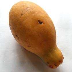 有機・無農薬栽培のフルーツパパイヤ
