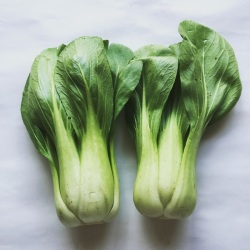 有機・無農薬栽培のチンゲン菜