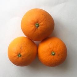 減農薬栽培の清見オレンジ