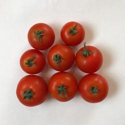 有機・無農薬栽培のミニトマト