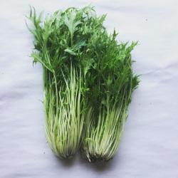 有機・無農薬栽培の水菜