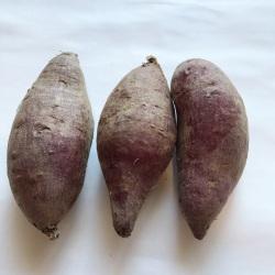 有機・無農薬栽培のサツマイモ