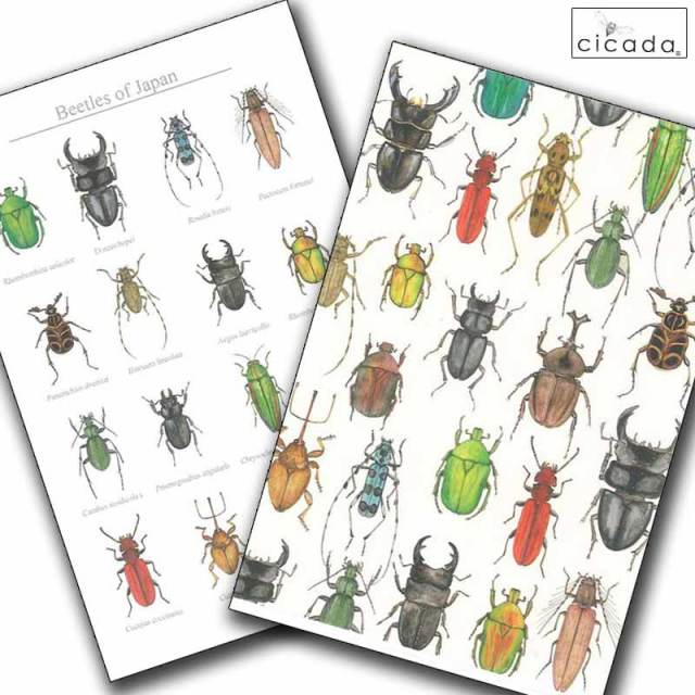 cicada はがき 昆虫シリーズ かぶと虫 beetles ポストカード