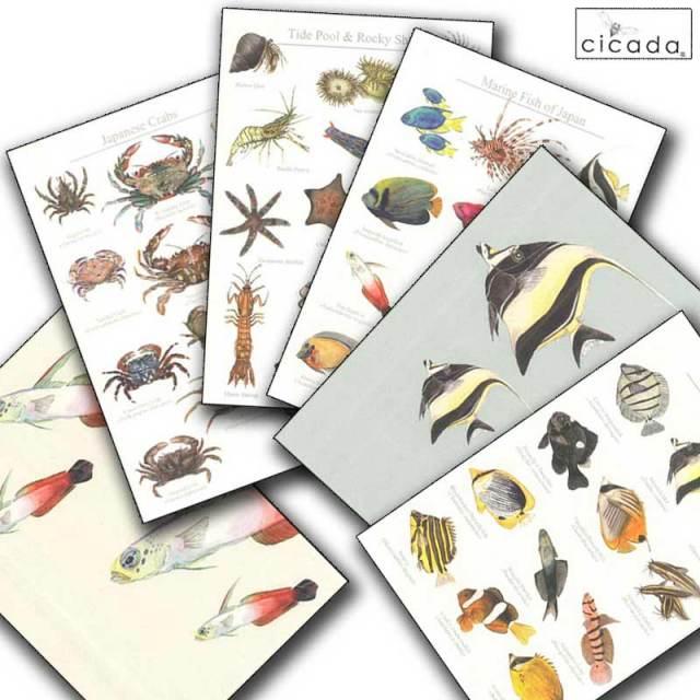 cicada はがき 海の生き物シリーズ ハタタテハゼ ツノダシ ポストカード