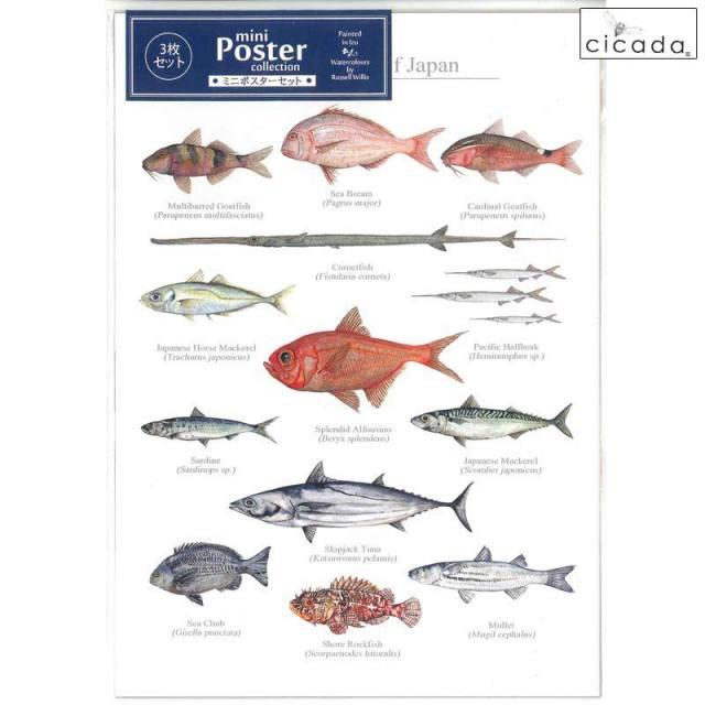 cicada ミニポスター 日本の海の魚 3枚セット Poster cllection Marine Fish of Japan