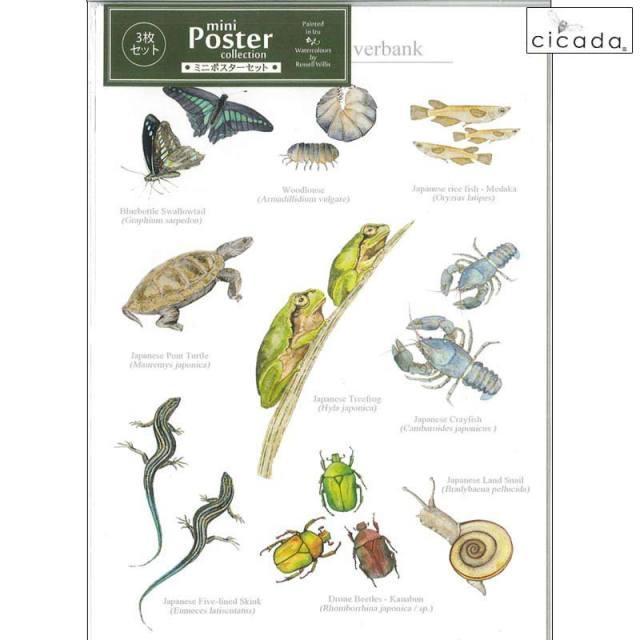 cicada ミニポスター 小動物と昆虫 3枚セット Poster collection