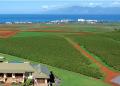 マウイモカ農園