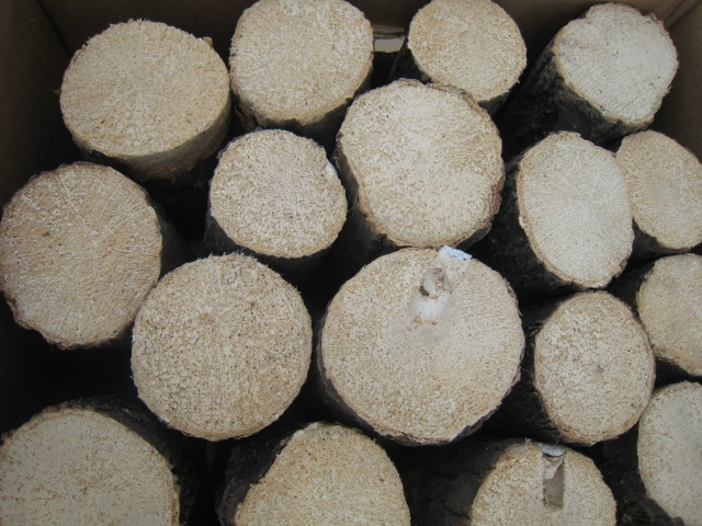 空中栽培コナラ産卵木 極上品 SS (直径 60mm前後) 1箱(15本)