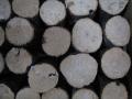 クヌギ産卵木 S(直径 75mm前後) 1箱(12本)
