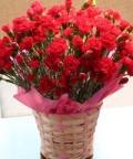 母の日 カーネーション 赤 花鉢5号 カゴ入り