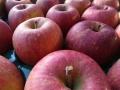 【訳あり格安限定】福島県須賀川産 ふじりんご 23玉優等