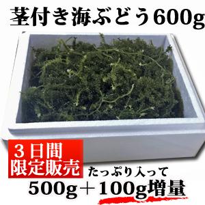 茎付き600g