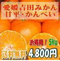 愛媛吉田みかん・甘平・かんぺい・.5kg・お徳用大きめサイズ・送料無料
