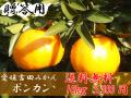 愛媛吉田みかん・ポンカン10kg贈答用【送料無料】