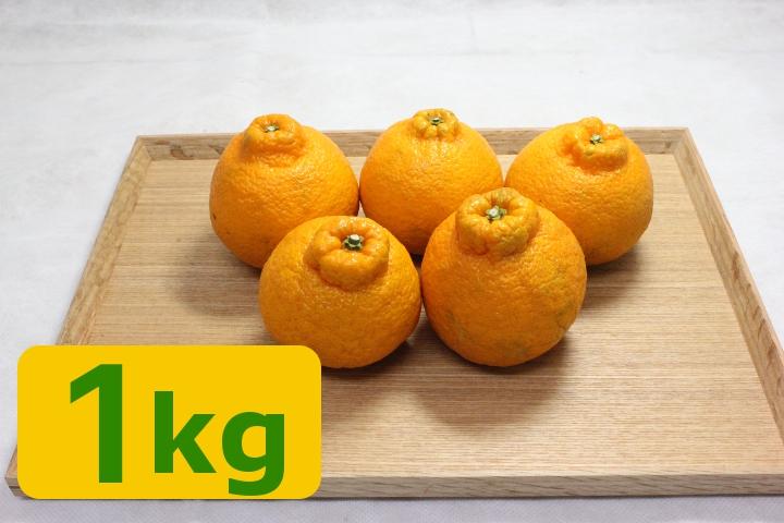 不知火(1kg)