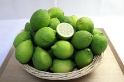 国産グリーンレモン(3kg)