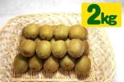 キウイフルーツ(2kg)