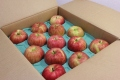 りんご(8kg前後:1ケース)