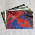 やぎゅうしんご森のポストカード「秋」