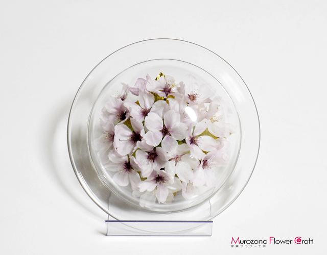 ボトルフラワーサクラ(ソメイヨシノ桜)贈り物ギフト 皿タイプS Lスタンド付