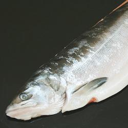冷凍 生時鮭 半身