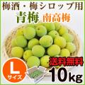 青梅 南高梅 10kg