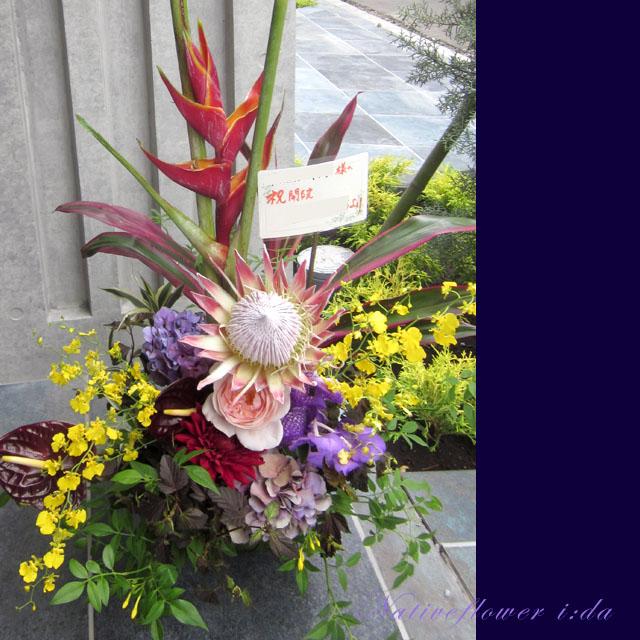 開店祝い 花 アレンジメント ヘリコニアロケット 二子玉川の花屋 ネイティブフラワーイーダ