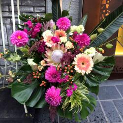 高輪に贈るお祝い花 アレンジメント 【生花アレンジ】ビビッダリア