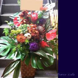 世田谷区に贈るお祝い花 大きなアレンジメント 【生花アレンジ】シンビ