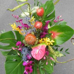 高輪に贈るお祝い花大きなアレンジメント ピンクッションとビッグアンス