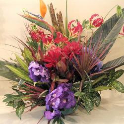 高輪に贈るお祝い花大きなアレンジメント バンダとグロリオサ