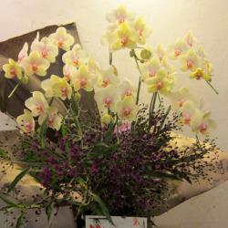 八雲に贈る大きなアレンジメント 胡蝶蘭とアザミのアレンジ