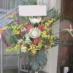 市谷加賀町に贈るお祝いスタンド花 ホワイトキングプロテア
